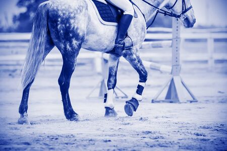 Monochrome blue image of a dappled horse with a rider in the saddle, which walks on a sandy arena, raising a haze of hooves. Фото со стока