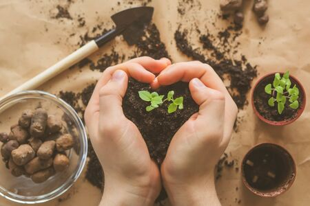 A person plants a young green sprout in a small pot, holding the earth in his hands in the shape of a heart. Concern for the environment. Love of plants.