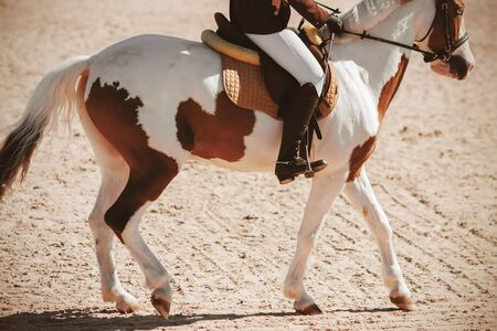 A mottled brown-and-white piebald horse with a rider in the saddle runs across the sand in the sunlight. Wild West.