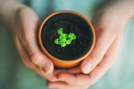 A person carefully holds in his hands a clay pot with a plant sprout. Plant care. Concern for the environment. New life. Фото со стока