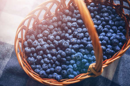 In a wicker basket, which stands on a woolen plaid, lies a lot of ripe blue blueberries, illuminated by the sun. Harvest. Picnic.