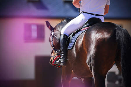 On a beautiful Bay horse, a man in white sports clothes is sitting in the saddle, illuminated by sunlight. Horseback riding. Rear view.