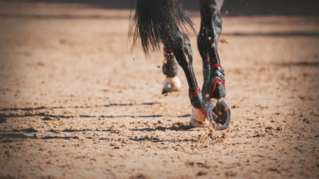 Close-up of the shod hooves of a black elegant horse with a long tail, which quickly runs at a gallop on a sandy arena, illuminated by sunlight.
