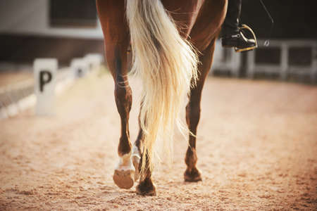 Hooves and long light tail of a beautiful sports horse that participates in dressage competitions on a Sunny day. Horseback riding. Equestrian sport. 写真素材