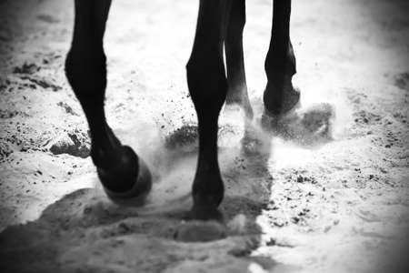 Black and white image of the legs of a black horse that runs on the sand, kicking up dust with its hooves, which is illuminated by the sun.