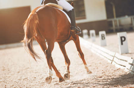 A sorrel fast horse participates in dressage competitions, kicking up dust with its hooves as it runs. Equestrian sport. Horseback riding.