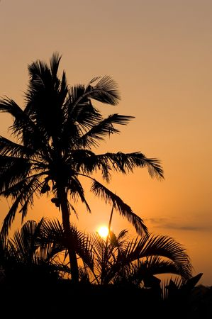 Silhouette of a palm tree against the early morning sun. Stock Photo - 3408968