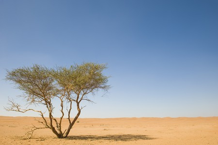 Thorn trees growing out of the desert sand in the Wahiba, Oman, casting shadow for animals or bedouin travellers. photo