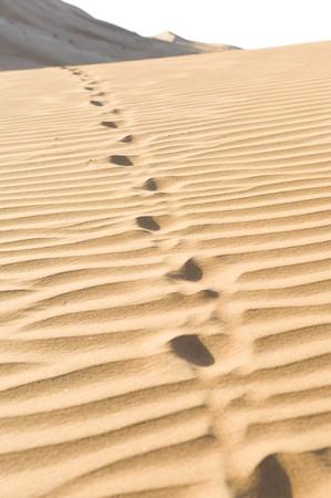Some camel tracks in the desert sand running over a dune. photo