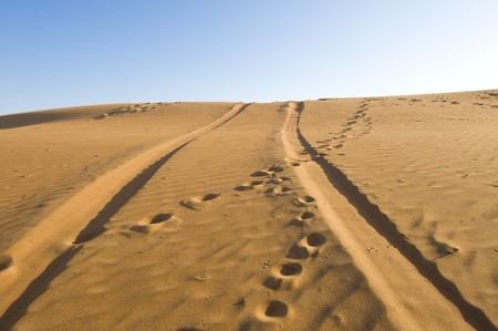 The tracks of a 4x4 vehicle crossing the tracks of a camel on the desert sand photo