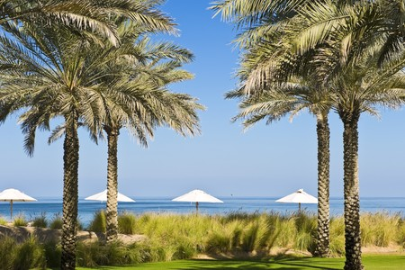 пышной листвой: Beautiful garden next to the beach with lush foliage and lawns. Фото со стока