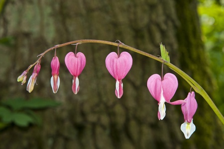 Some beautiful flowers growing during the early spring in the Netherlands. photo