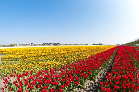 Some beautiful flowers growing during the early spring in the Netherlands, taken with a fisheye lens. photo