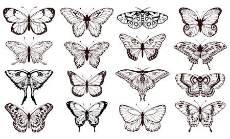 Butterfly silhouettes. Black outline butterflies tattoo graphic, tropical cute insects. Metamorphosis and spring symbols isolated vector set for wedding card design. Various forms of moths Vektorgrafik
