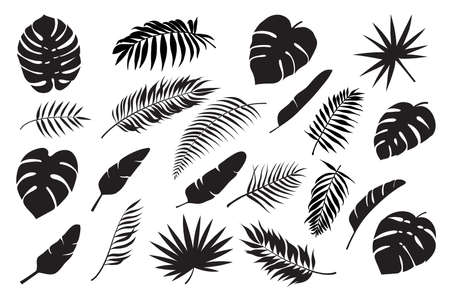 Palm leaves silhouettes. Tropical leaf monstera, banana and coconut. Jungle foliage, exotic rainforest palm tree floral decoration vector set. Paradise branches and leafage for summertime