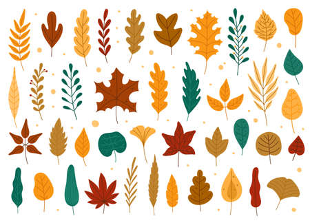 Autumn leaves. Oak, maple, elm dry fallen leaf. Hand drawn fall forest yellow or red foliage. Dried plant leaves, autumnal falling leaf vector set, Seasonal herbarium, tree branches Vettoriali