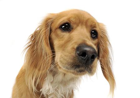 mutt portrait