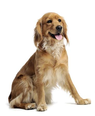 mixedbreed dog in studio