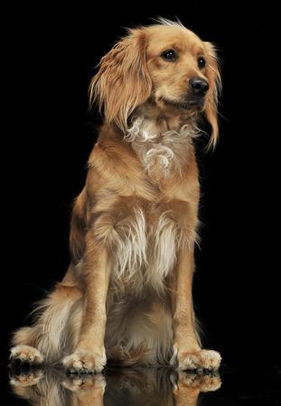 cur: Nice dog in a dark background Stock Photo