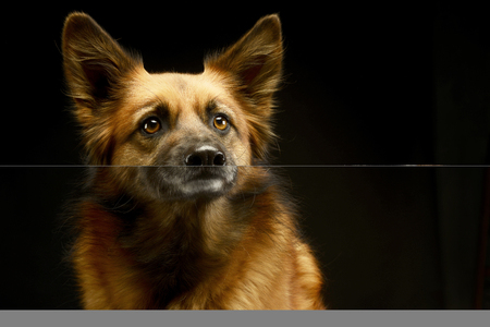 mixed breed dog in black background studio