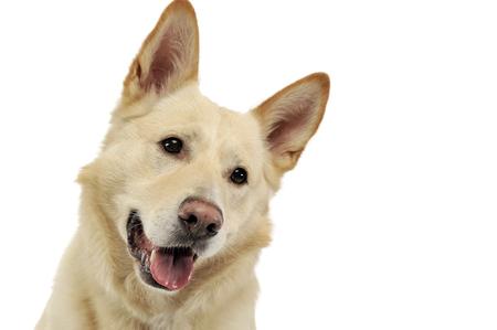 smilie: Smilie face dog portrait in white studio
