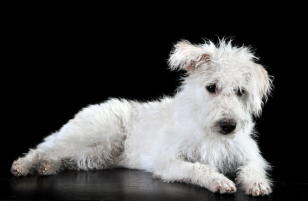 Mixed breed white dog lying in a dark photostudio