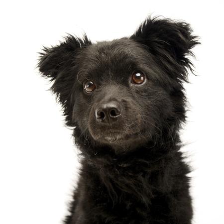 mixed breed black funny dog portrait in studio