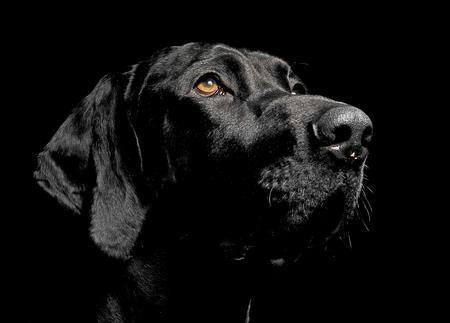 de raza mixta retrato del perro negro en fondo negro Foto de archivo