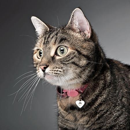 lieve kat portret in een fotostudio Stockfoto