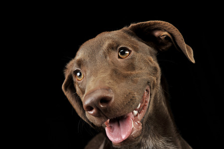 beautiful flying ears mixed breed dog portrait in black background
