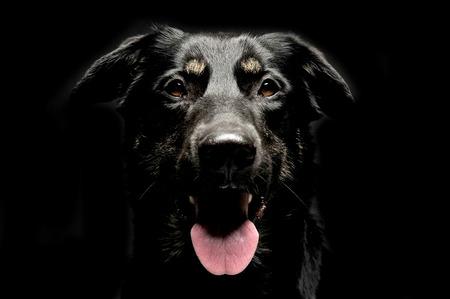 escuchar: Retrato de perro negro de raza mixta en estudio de fondo oscuro