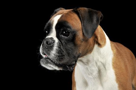 Young Boxer portrait in a black photo studio