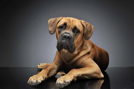 Schön Braun Mutt Hund In Dunklen Studio Sitzt Lizenzfreie Fotos ...