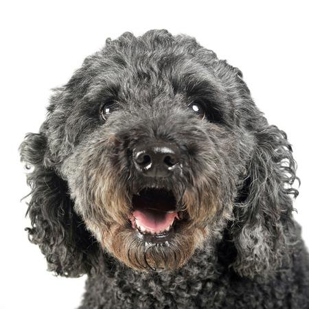 feeling good: Puppy pumi feeling good in a white photo studio