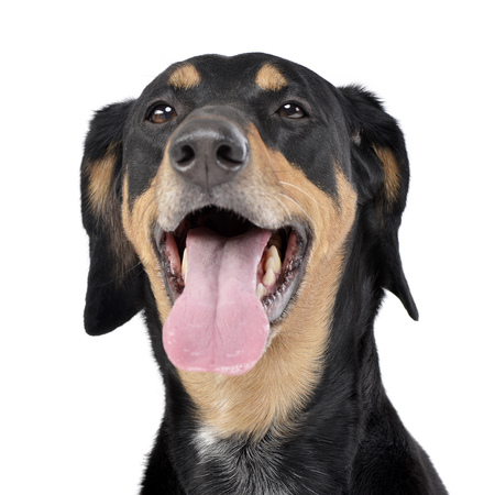Portrait of an adorable mixed breed dog, studio shot, isolated on white.