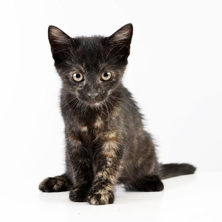 Studio shot of a cute little kitten sitting on white background.