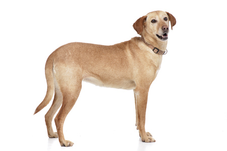 Studio shot of an adorable mixed breed dog standing on white background. Stockfoto