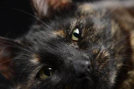 Portrait of an adorable domestic cat - isolated on black background. Stock Photo
