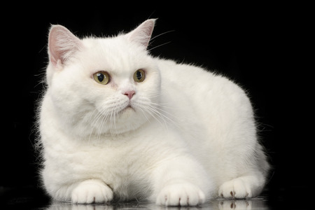 Studio shot of an adorable domestic cat lying on black background.