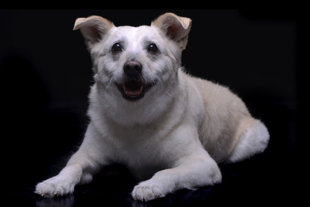 Studio shot of an adorable mixed breed dog lying on black background.