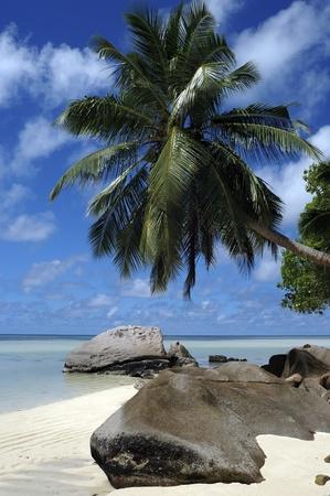 idyllic beach on Seychelles island Stock Photo - 9993165