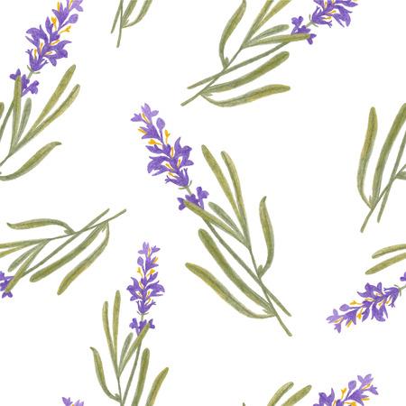 provence: pencil sketch illustration of lavender of Provence