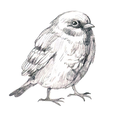 lápiz ilustración boceto del gorrión del pájaro