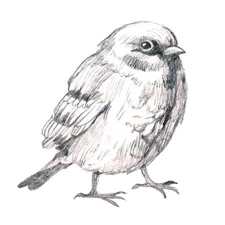 Potlood schets illustratie van de vogel mus Stockfoto - 39077392