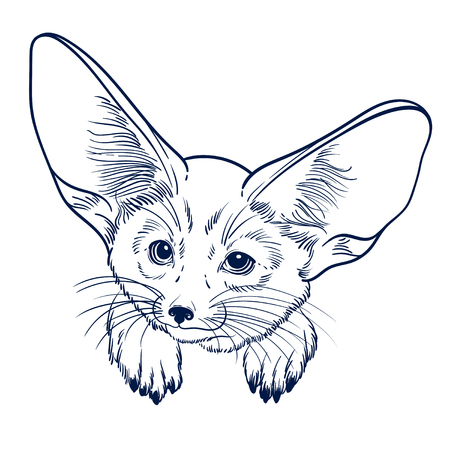 Cute animal. Little fox Fennec. Children linear illustration for coloring book. To print T-shirts, bags or cover.