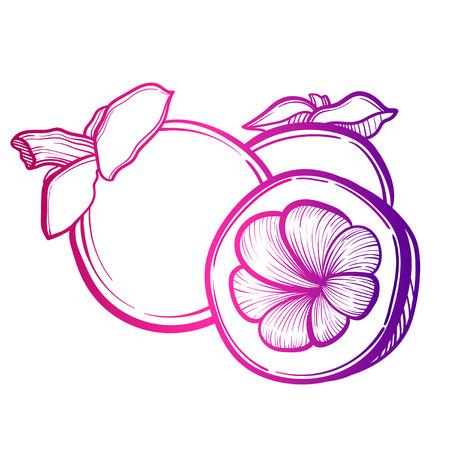 Illustrazione vettoriale con frutta mangostano asiatico. Arte del tatuaggio.