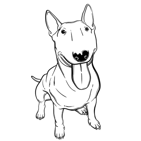 Cute vector illustration with bullterrier. Home dog. Perfect for printing clothes or stickers or coloring books. Illustration