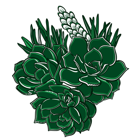 Vector set of a plant succulents. Bouquet with succulents and leaves.