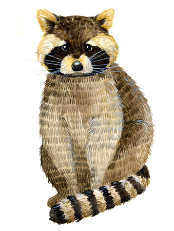 Watercolor illustration with little raccoon. Beautiful raccoon on a white background. Child illustration.