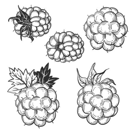 Sketch style vector eco food illustration. Hand drawn raspberry and blackberry set isolated on white background. Stock Illustratie